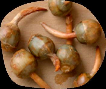 「旬」の食材